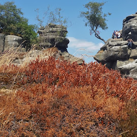 Brimham rocks by Phil Cookson - Landscapes Caves & Formations ( outstanding scenery, lovely walks, nature, stunning views, heather moors )