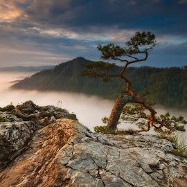 Sokolica by Pawel Uchorczak - Landscapes Mountains & Hills ( mountain, pieniny, light, sun, poland )