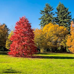IMG_4265 edited,fall,tree,red,yellow,green,landscape,cedar.jpg