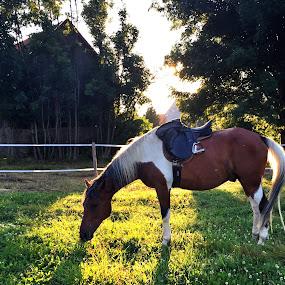 Horse  by Ivana Tilosanec - Instagram & Mobile iPhone ( animals, horses, sunset, horse, sun, animal )