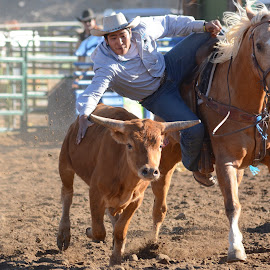 Steer Wrestling by Laura DeSimone - Sports & Fitness Rodeo/Bull Riding