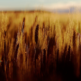 by Brian Robinson - Landscapes Prairies, Meadows & Fields