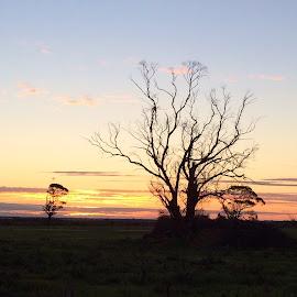 Sunset Solitude by Vera Thyssen - Instagram & Mobile iPhone ( calm, peaceful, silhouette, sunset, solitude )