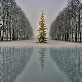 Crhistmas in Oslo (Norway) by Gianluca Presto - Public Holidays Christmas ( water, nobody, reflection, park, christmas, holidays, norway, lights, winter, tree, cold, nature, ice, oslo, peace, snow, silence, christmas tree, decorations, iced,  )