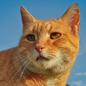 cat0sm3.jpg