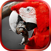 Free Color Photo Editor Effects APK for Windows 8