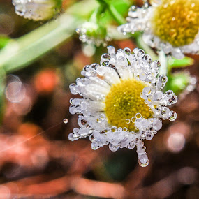 by Olivia Emery - Nature Up Close Natural Waterdrops