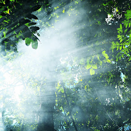 Through the Mist by Glo Arbatin - Nature Up Close Trees & Bushes ( trees, forest, light )