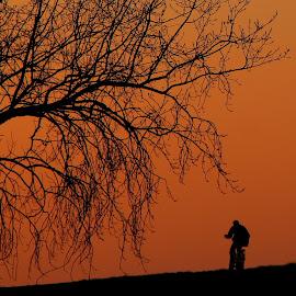 Tree and man by Hilda van der Lee - Transportation Bicycles ( winter, bike, tree, sunrise, man,  )
