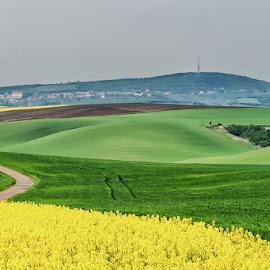 Spring colors. by Vladimir Vocelka - Landscapes Prairies, Meadows & Fields ( field, south moravia, czech republic, spring, near kyjov )