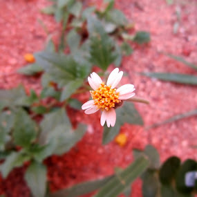 Nature up close by Krishna Kumar - Nature Up Close Gardens & Produce ( tiny, plant, beauty, flower, yellow flower )