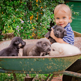 Load of Love by Jason Weigner - Babies & Children Toddlers ( child, dogs, wheelbarrow, outdoor, puppy, baby, smile, toddler, boy )