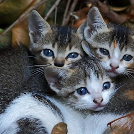 by Vivek Raut - Animals - Cats Kittens ( cats, kitten, cat, kittens )