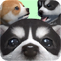 Game Cute Pocket Puppy 3D - Part 2 apk for kindle fire