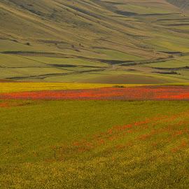 Castelluccio 8 by Bruno Brunetti - Landscapes Prairies, Meadows & Fields ( flowers, italy, castelluccio, fields,  )