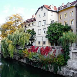 Ljubljana Slovenia by Shari Linger - City,  Street & Park  Historic Districts ( historical districts, slovenia, ljubljana, easterneurope, travel )