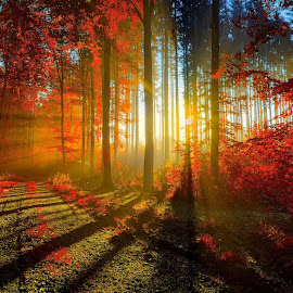 The Red Forest in the morning by Abbas Mohammed - Landscapes Forests ( love, sexy, red, sun rise, color, shine, forest, rays )