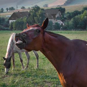 koník.jpg