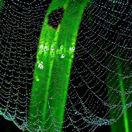 Web on grass by David Winchester - Nature Up Close Webs