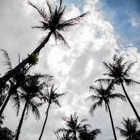 Trees Up High by Yi Xuan Lee - Backgrounds Nature ( sky, silhouette, palm trees, trees, high )