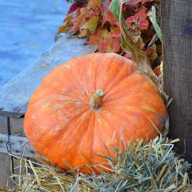 by Réal Michaud - Food & Drink Fruits & Vegetables ( orange, wood, straw, pumkin, cooking, potiron )
