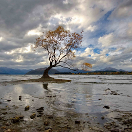 Landmark by Winkie Chau - Landscapes Travel ( landamrk, travel, lake wanaka, landscape, lonely tree,  )