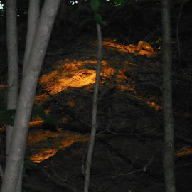 This is actually the ground I was walking on a trail one summer night and the sun had come in the forest just right as if to light the ground on fire and this is the result of  it. by Maria Dilmore - Nature Up Close Leaves & Grasses