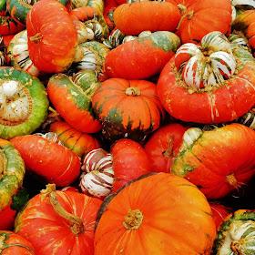 Papa Johns pumpkin patch and farm. (10).JPG