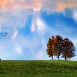 Heavenly Symphony by Dragan Milovanovic - Landscapes Prairies, Meadows & Fields