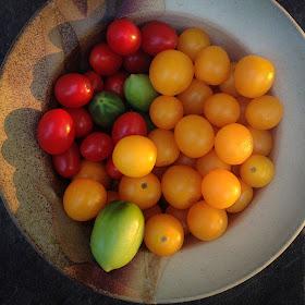 tomatoes IMG_3090.jpg