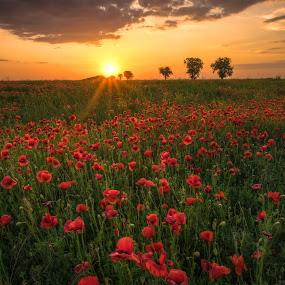 june sunset by Cornelius D - Landscapes Sunsets & Sunrises