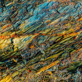 Rocks and pine needles by Roberto Sorin - Nature Up Close Rock & Stone ( plant, old, surface, colorful, ground, stone, rock, needles, leaf, yellow, landscape, leaves, creativity, multi colored, close, backdrop, sisters, macro, nature, color image, tree, autumn, vibrant color, pine, abstract, chaos, green, texture, colors, art, wallpaper, forest, woods, close-up, material, korean, red, pattern, season, color, blue, textured, fall, background, outdoor, summer, brown, day, natural, design )
