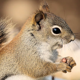 Saturdays Best 57 by Terry Saxby - Animals Other Mammals ( canada, terry, goderich, ontario, nancy, saxby, squirrel )