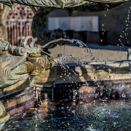 Dolphin Fountain in Ulm by Linda Brueckmann - Buildings & Architecture Statues & Monuments
