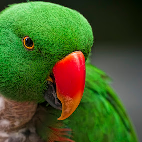 oops by Cheri McEachin - Animals Birds