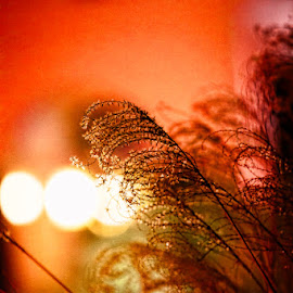 Night Grass by Eugene Linzy - Nature Up Close Leaves & Grasses ( reflection, colorful, grass, night, bokeh )