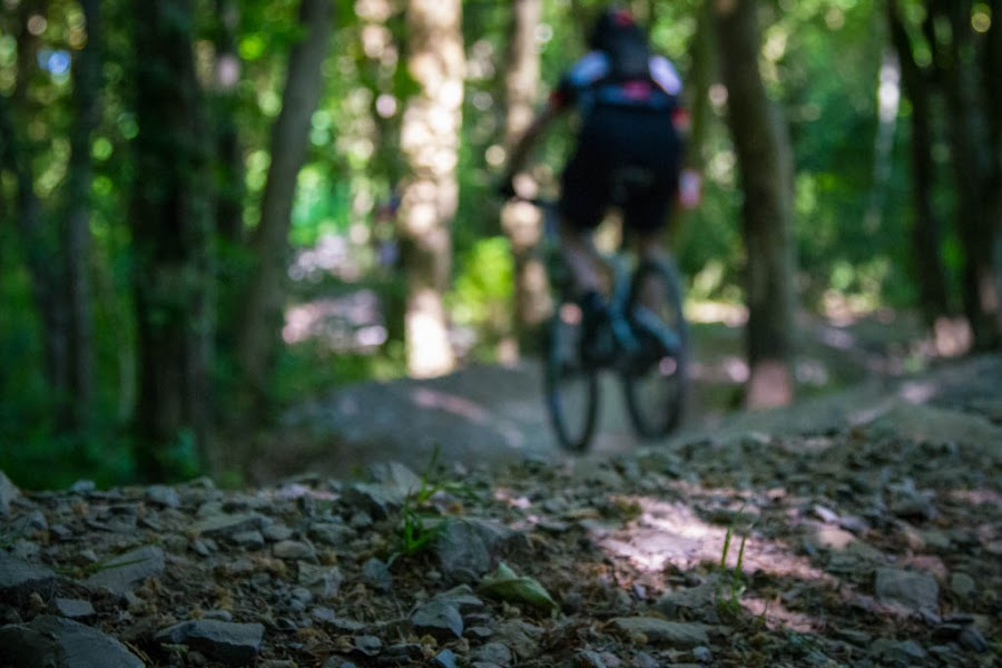 Into the Distance by John Puddy - Sports & Fitness Cycling ( bike, mountain bike, woodland, blur, race )