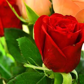 Thyself for you by Dibyendu Banik - Novices Only Flowers & Plants