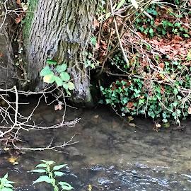 au bord de l'eau by Nathalie Coget - Nature Up Close Water