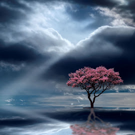 Tree Sunbeam by Lana Jones - Digital Art Places ( clouds, water, sky, tree, reflections, place, sun beam, rays )