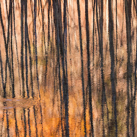 River Reflections by Kevin Frick - Abstract Patterns ( abstract, reflections, river )