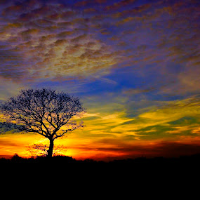 Tree in sunset in Denmark by Kim Moeller Kjaer - Landscapes Sunsets & Sunrises