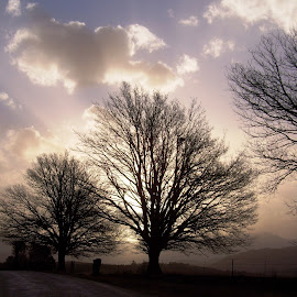 Winter trees in the Drakensberg by Michelle Oxley - Nature Up Close Trees & Bushes