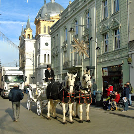 PREPARED FOR CAVALCADE OF MAGI by Wojtylak Maria - Public Holidays Christmas ( cavalcade, horses, carriage, street, white,  )