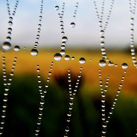 by Jana Kubínová - Nature Up Close Natural Waterdrops