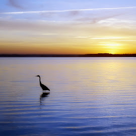 Dunedin Causeway, Florida. by Edward Allen - Landscapes Waterscapes (  )