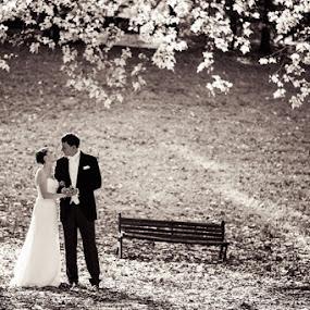 Romantic wedding in Rome by Artur Jakutsevich - Wedding Bride & Groom ( love, the bride and groom, wedding autumn wedding in rome, wedding italy, romance )