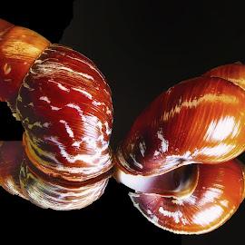 Pretty Pair by Dave Walters - Artistic Objects Still Life ( mystic, colors, artistic, moody, natur, seashells, twins, lumix fz2500 )