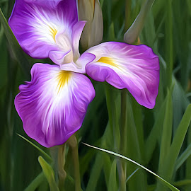 Iris by Dawn Hoehn Hagler - Digital Art Things ( oregon, portland, purple, portland japanese gardens, digital art, purple iris, iris, garden, oil paint, flower, purple flower )
