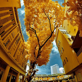 Old Town, Old time, old memory by Jimmy Chiau - Buildings & Architecture Public & Historical ( infrared, buildings, architecture, public, singapore )